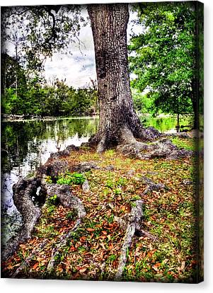 Fall In Audubon Park Canvas Print by Ray Devlin