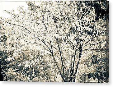 Fall In Black And White Canvas Print by Ronda Broatch