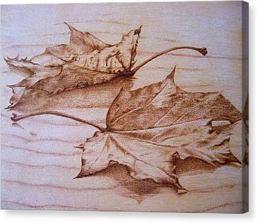 Fall In Canvas Print by Cynthia Adams
