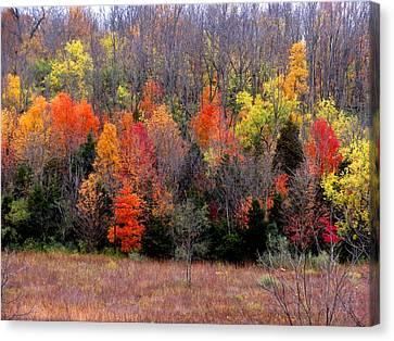 Fall In Dayton Ohio Canvas Print