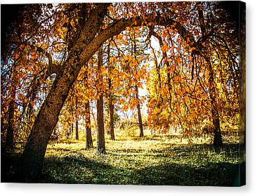 Fall In Laguna Canvas Print