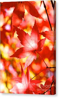 Fall In Love  Canvas Print by Jay Nodianos