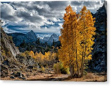 Fall In The Eastern Sierra Canvas Print by Cat Connor