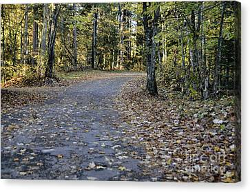 Fall In The North Woods Canvas Print