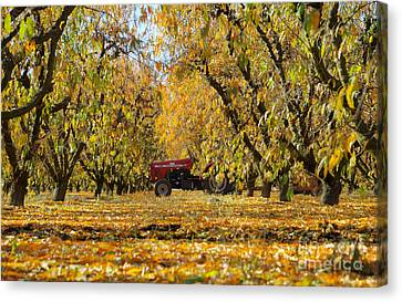 Fall In The Peach Orchard Canvas Print by Jim and Emily Bush