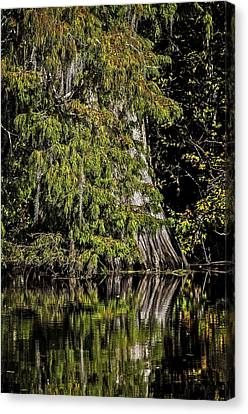 Canvas Print featuring the photograph Fall In The Swamp by Andy Crawford