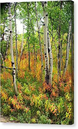 Fall In The Tetons Canvas Print by Marty Koch