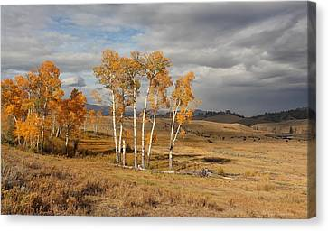Fall In Yellowstone Canvas Print by Daniel Behm