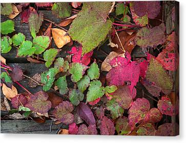 Canvas Print featuring the photograph Fall Ivy by Wayne Meyer