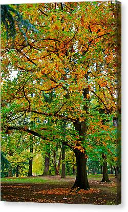 Fall Kissing The Leaves  Canvas Print by Rae Berge