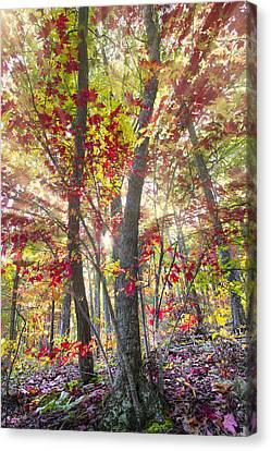 Fall Laser Beams Canvas Print by Debra and Dave Vanderlaan