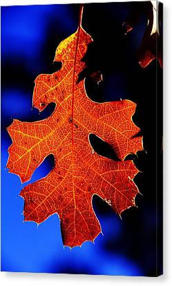 Fall Leaf Closeup Canvas Print