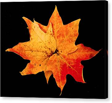 Canvas Print featuring the photograph Fall Leaf Trio by Dee Dee  Whittle