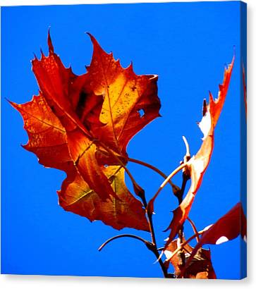Canvas Print featuring the photograph Fall Leave by David  Norman