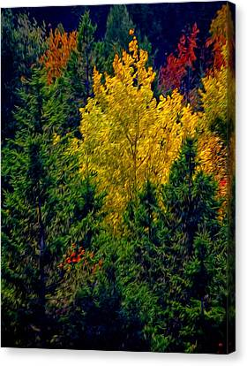 Fall Leaves Canvas Print by Bill Howard