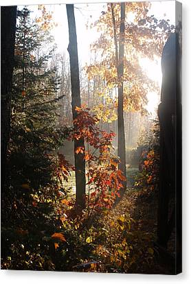 Fall Leaves In Morning Canvas Print by Susan Crossman Buscho