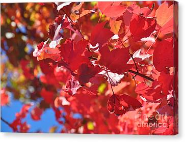 Canvas Print featuring the photograph Fall Leaves In Oregon by Mindy Bench