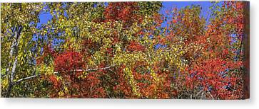 Autum Abstract Canvas Print - Fall Leaves In So Cal by Scott Campbell