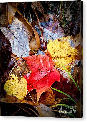 Canvas Print featuring the photograph Fall Leaves In The Rain by David Perry Lawrence