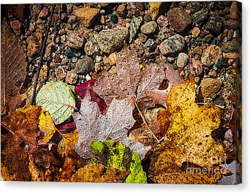 Fall Leaves In Water Canvas Print by Elena Elisseeva