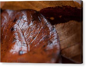 Canvas Print featuring the photograph Fall Leaves by Haren Images- Kriss Haren