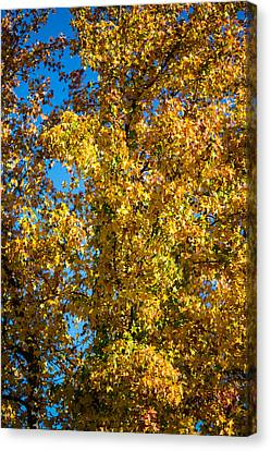 Fall Leaves Canvas Print by Mike Lee