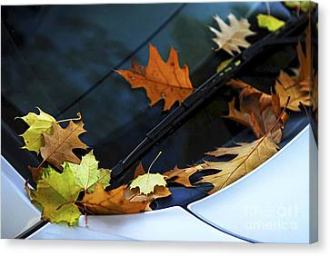Fall Leaves On A Car Canvas Print by Elena Elisseeva