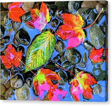 Fallen Leaf On Water Canvas Print - Fall Leaves On Black Rocks In Water by Panoramic Images