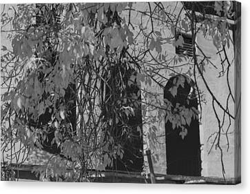 Fall Leaves On Open Windows Jerome Balck And White Canvas Print