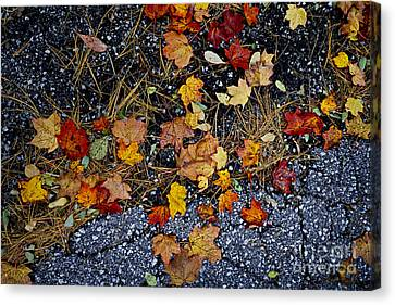 Pine Needles Canvas Print - Fall Leaves On Pavement by Elena Elisseeva