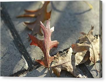 Valerie Rakes Canvas Print - Autumn Oak Leaves On Sidewalk by Valerie Collins