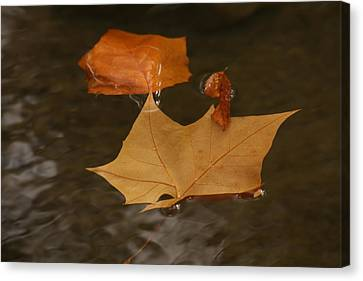 Fall Leaves On Water Canvas Print