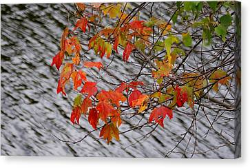 Fall Leaves Over The Lake Canvas Print