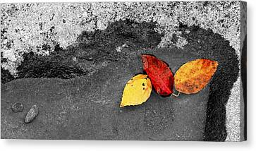 Canvas Print featuring the photograph Fall Leaves by Wendell Thompson