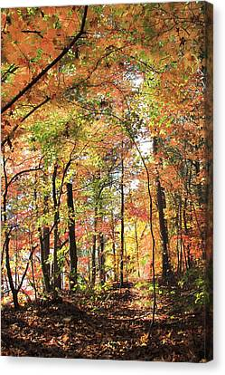 Canvas Print - Fall Light by AR Annahita
