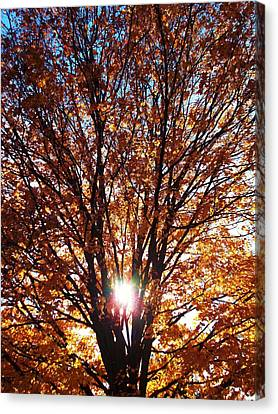 Fall Light Canvas Print