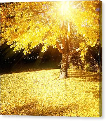 Fall Light Canvas Print by Les Cunliffe