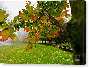 Fall Maple Tree In Foggy Park Canvas Print by Elena Elisseeva