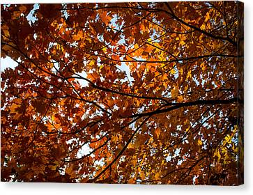 Canvas Print featuring the photograph Fall Maples - 02 by Wayne Meyer