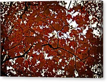 Canvas Print featuring the photograph Fall Maples - 04 by Wayne Meyer