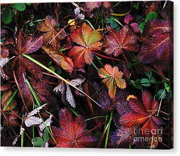 Canvas Print featuring the photograph Fall Mix by Janice Westerberg