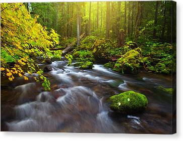 Fall Morning Hike Canvas Print by Darren  White