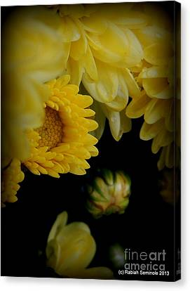Fall Mums Growing At Blue Horse Rescue Canvas Print