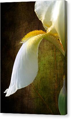 Fall Of Iris Canvas Print by Randy Wood
