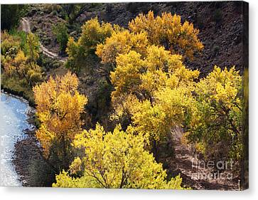 Canvas Print featuring the photograph Fall On The Chama River by Roselynne Broussard