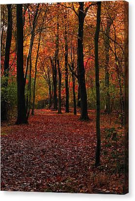 Canvas Print featuring the photograph Fall Path by Raymond Salani III