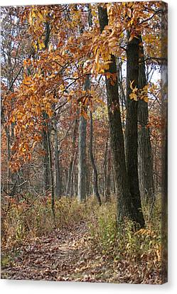 Overhang Canvas Print - Fall Pathway Overhang by Dylan Punke