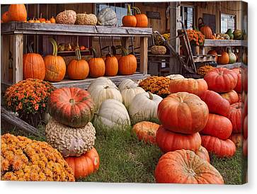 Fall Pumpkins And Gourds Canvas Print
