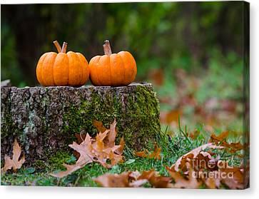 Fall Pumpkins Canvas Print