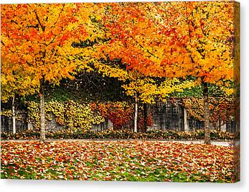 Fall Rainbow Canvas Print by Crystal Hoeveler